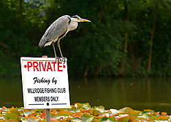 heron-nofishing.jpg