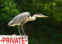 heron-nofishing2.jpg