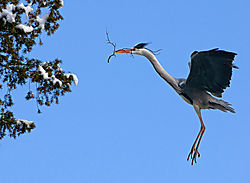heron_with_branch.jpg