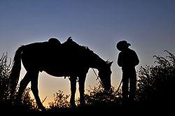 horseweb2.jpg