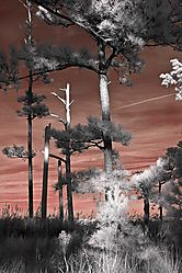 infrared-colonial-williamsburg_2954.jpg