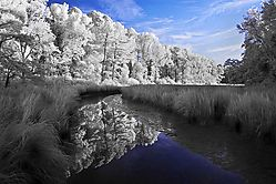 infrared-colonial-williamsburg_2995.jpg