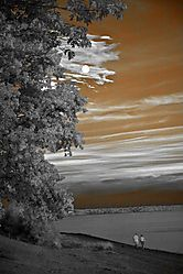 infrared-colonial-williamsburg_3036.jpg