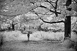 infrared_2200.jpg