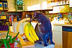kiki-high-sat-w-bananas.jpg