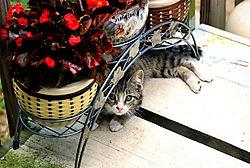 kitten_3427.jpg