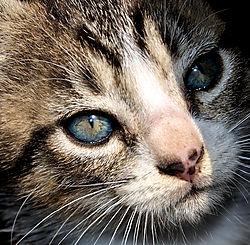 kitten_n_3892.JPG