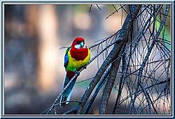 lake_Neangar-5948-Edit-Edit.jpg