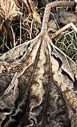 leafweb.jpg