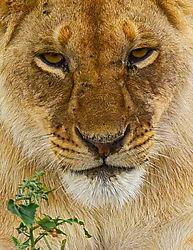 lion_kids-1-3.jpg