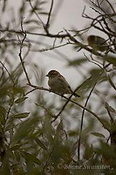 little_bird1a.jpg