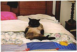 lounging_cat.jpg