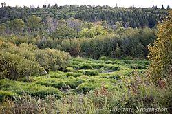 marshy_area1.jpg