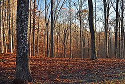 meriwether-lewis-morning-woods--900.jpg