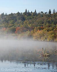 mist_in_end_of_summer_trees1.jpg