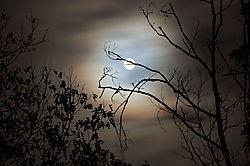 moon_014.JPG