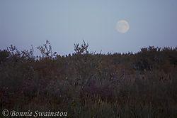 moon_over_reeds1.jpg