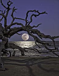 moon_rise_at_Jekyl_RFP.jpg