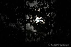 moon_trees1.jpg