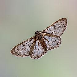 moth_on_window.jpg