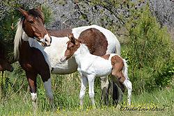 mother_foal_9520_web.jpg