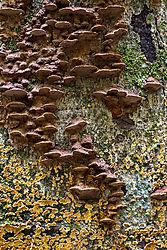 mushroomsDSC_6847.jpg