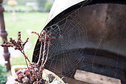nik-spinnennetz.jpg