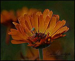 orange_flower_green_bug_paint_DSC1820_copy.jpg