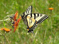orangepurpbutterfly.jpg