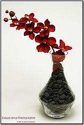 pebbled_flowers.jpg