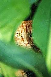 peeping_tom-Better.jpg