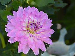perfectflower.jpg