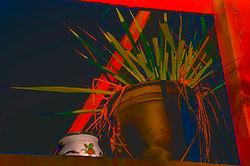 plants-on-deck-stylaized-2.jpg