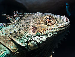 portland_aquarium-2203.jpg