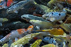 portland_aquarium-2224.jpg