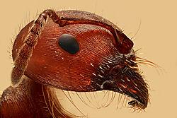 red-ant.jpg