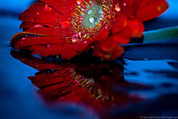red_reflection.jpg