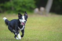 running_b_w_dog-klein.jpg