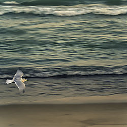 seagull15.jpg