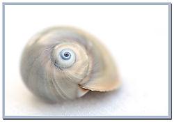 shark_eye_shell.jpg