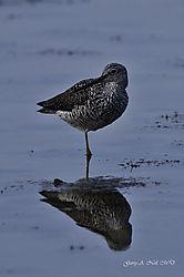 shore_bird1.jpg