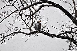 snow_on_eagle.JPG