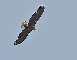 soaring.jpg
