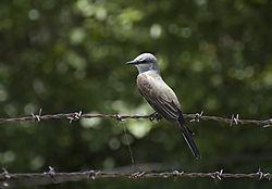 some_bird.jpg