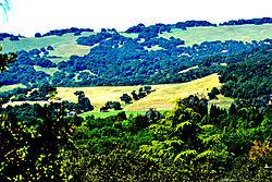 sonoma_mountain_200503_9117.jpg
