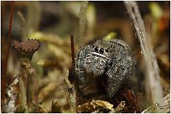 spider16.jpg
