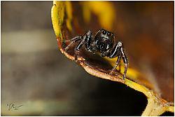 spider24.jpg