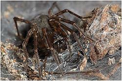 spider34.jpg