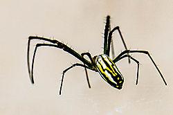 spider37.jpg