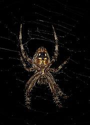 spider44.jpg
